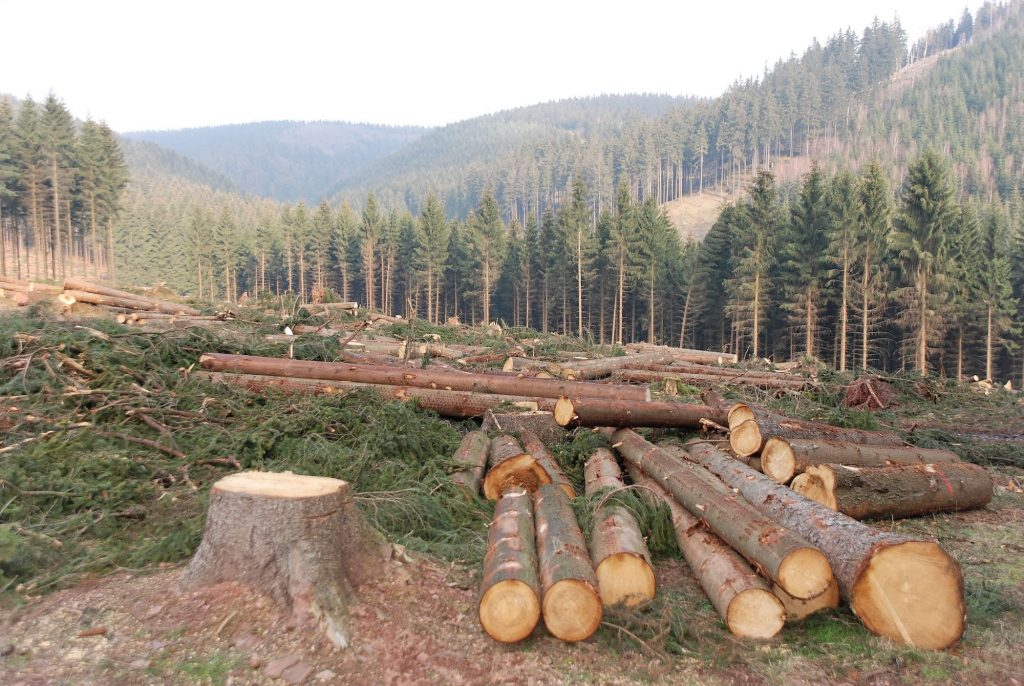 Deforestation Facts: trees cut down for their timber.