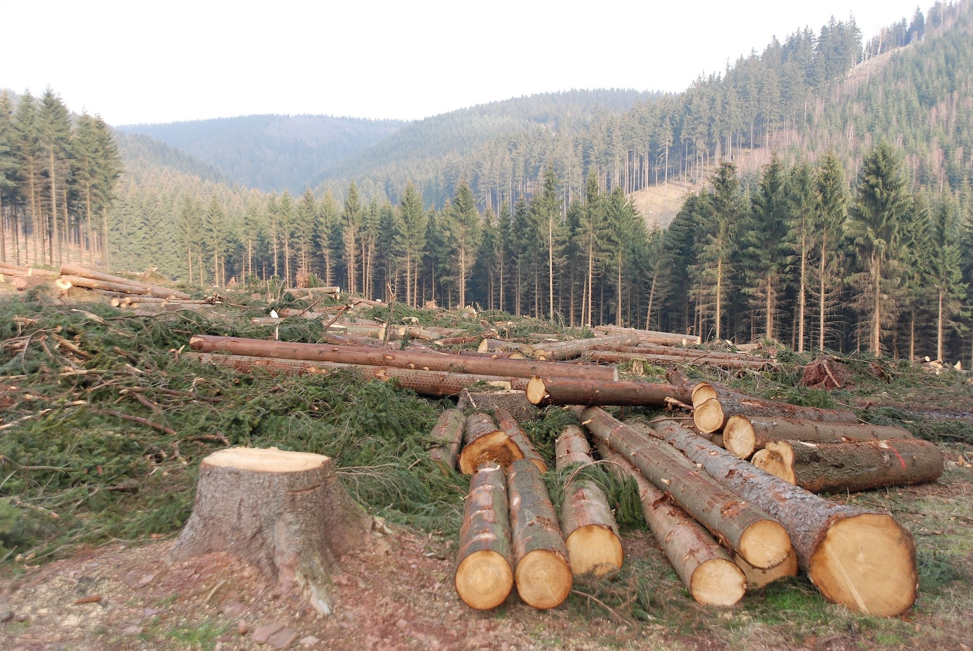 Top 10 Facts about Deforestation