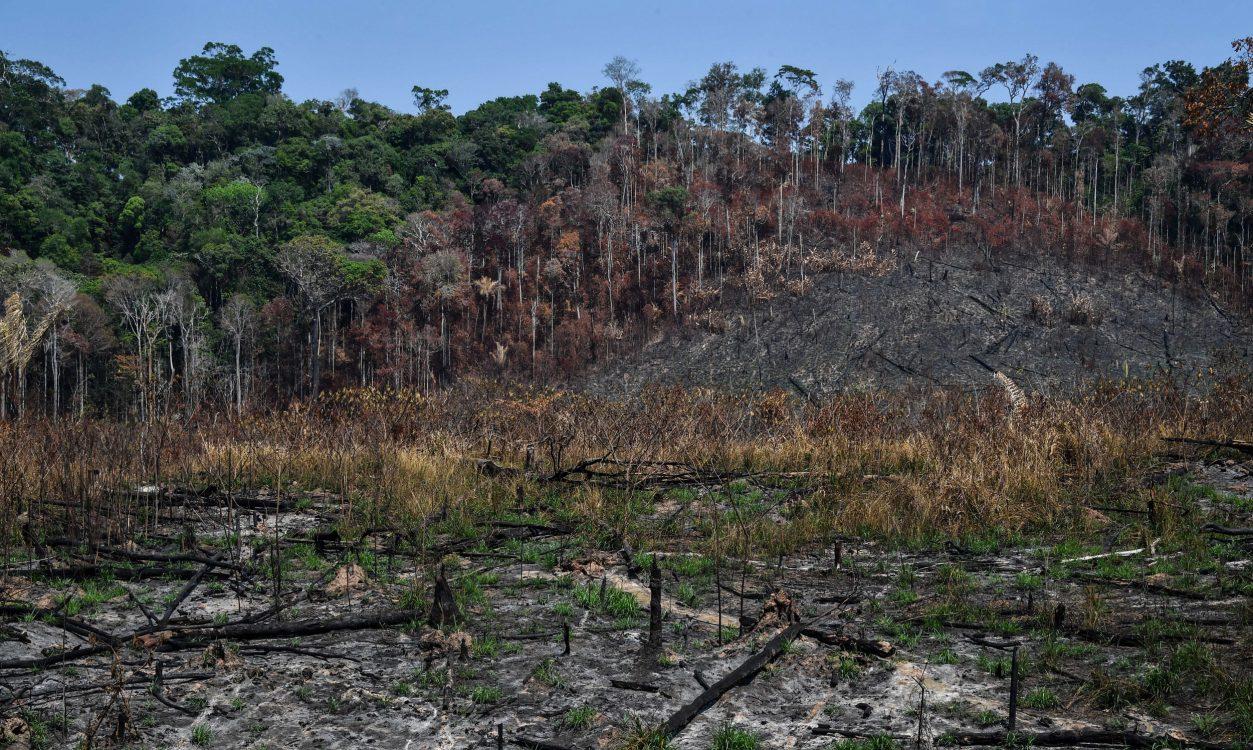 deforestation debate