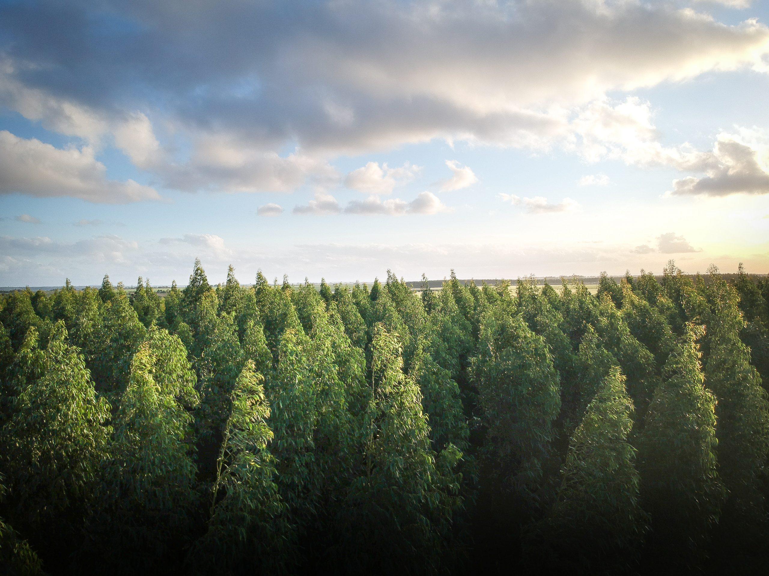 Tips for Reforestation