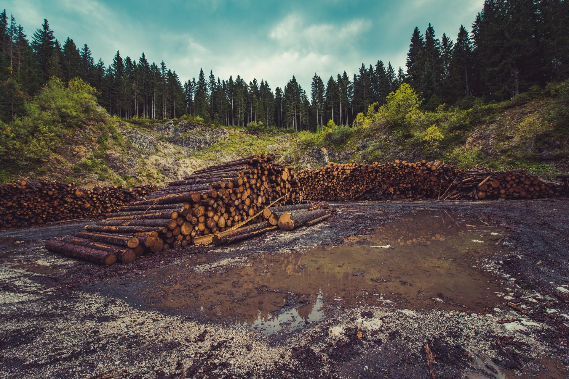 logging and deforestation