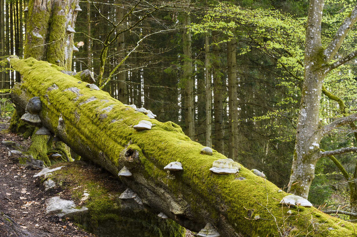 When a Tree Falls It Makes More Than a Sound