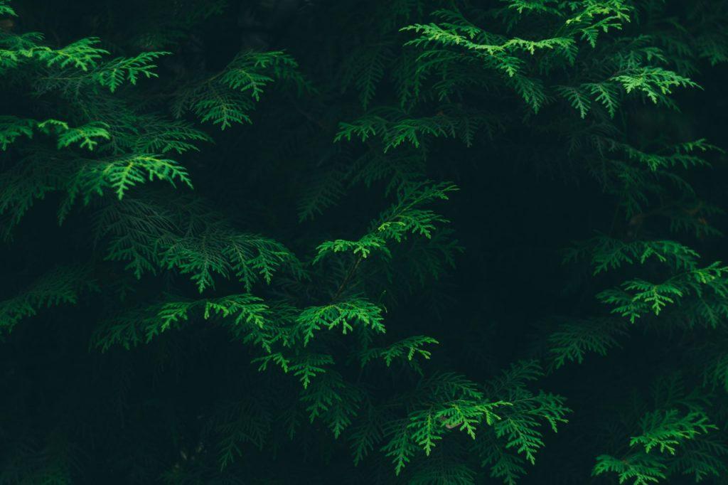 image of co2 reducing tree foliage