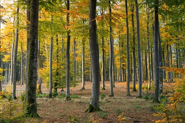 forests need ecology and management