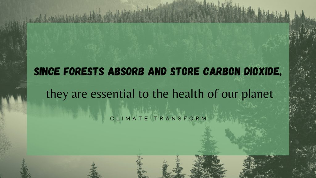 quote about forest ecology and management